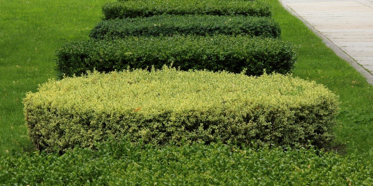 hedge trimming dublin
