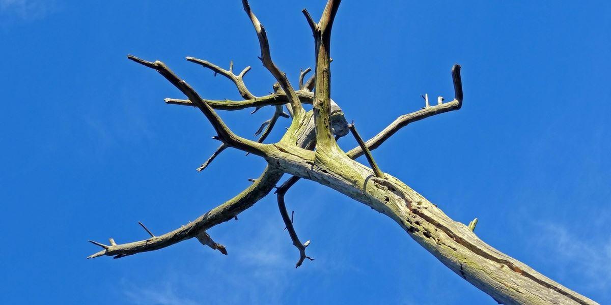Arborist dublin