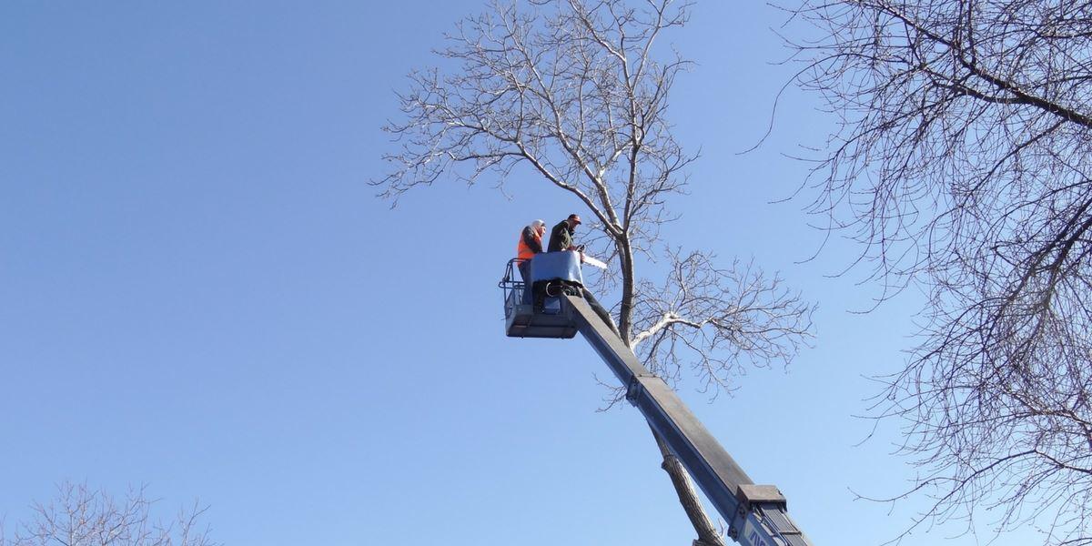 flannery's tree care dublin. tree surgeon dublin