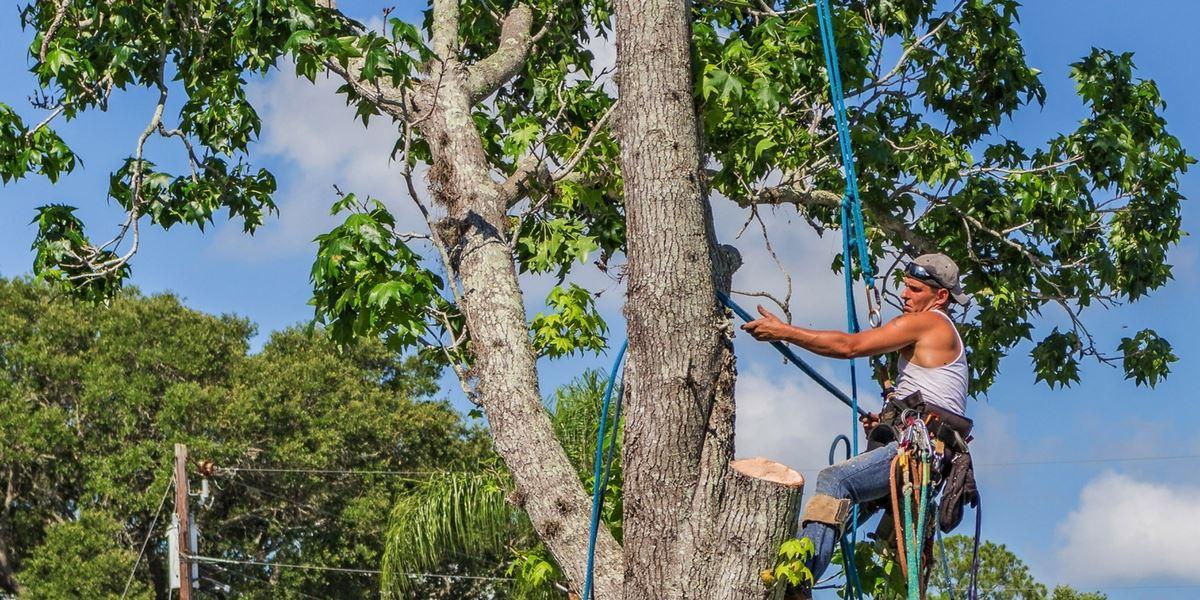 Tree Shredding dublin