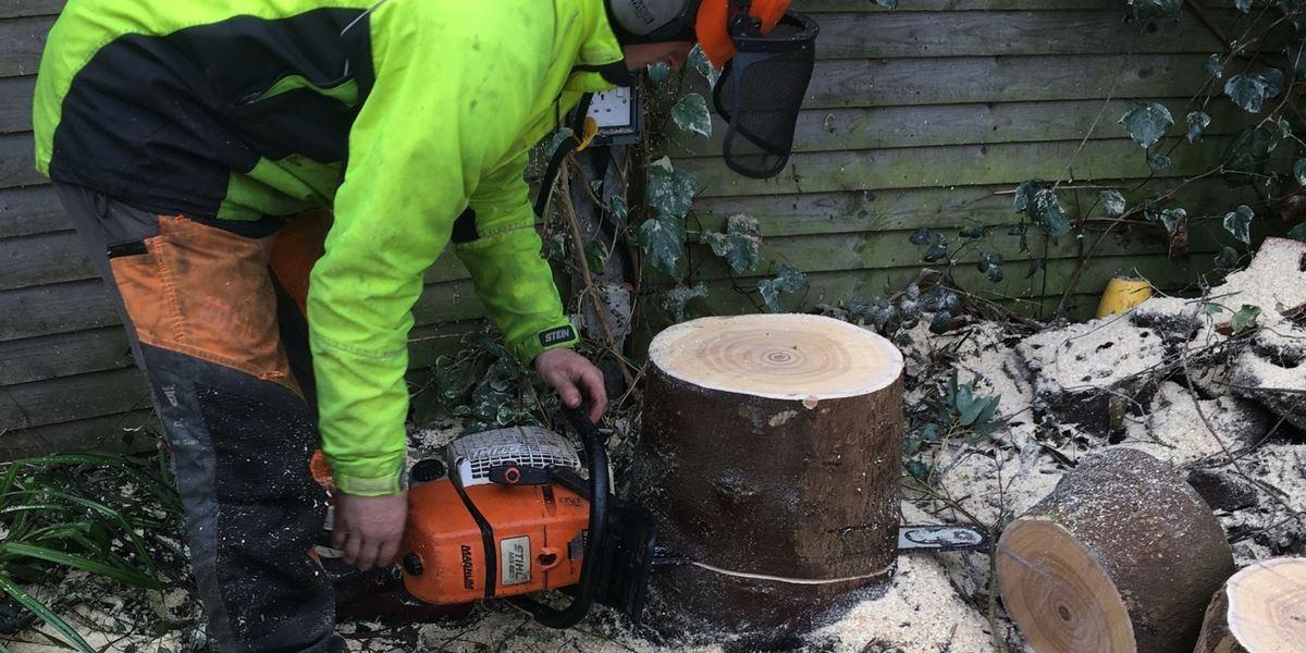emergency tree cutting dublin