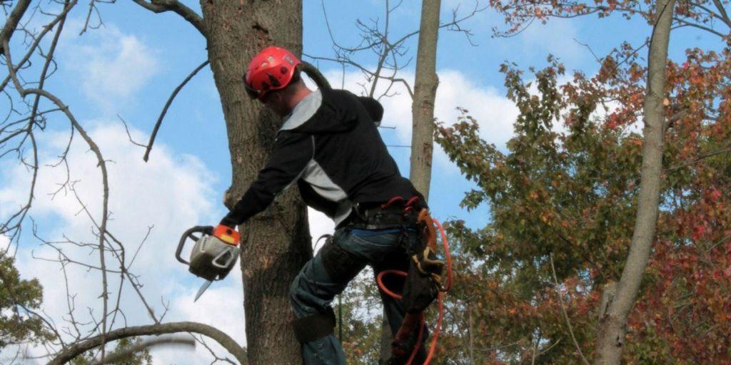 Flnnery's Tree Removal Dublin