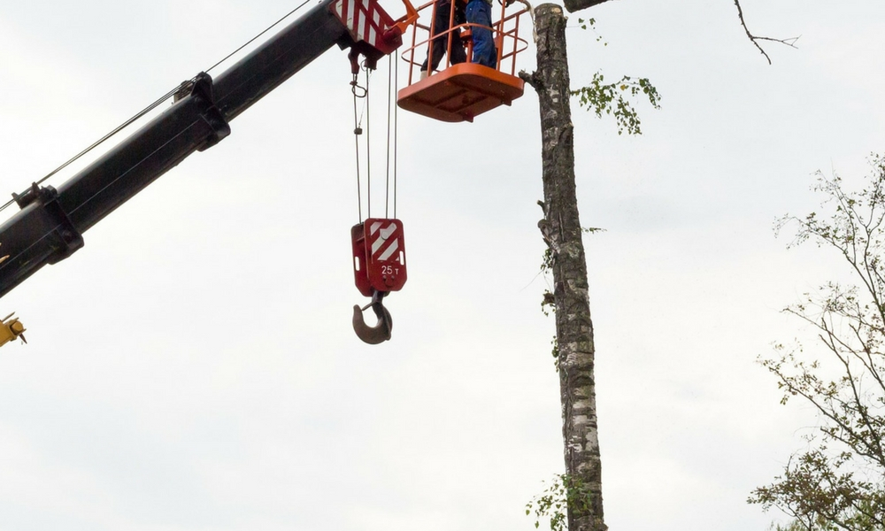 flannery's tree removal dublin