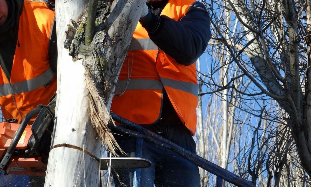 Tree Removal Service in Dublin