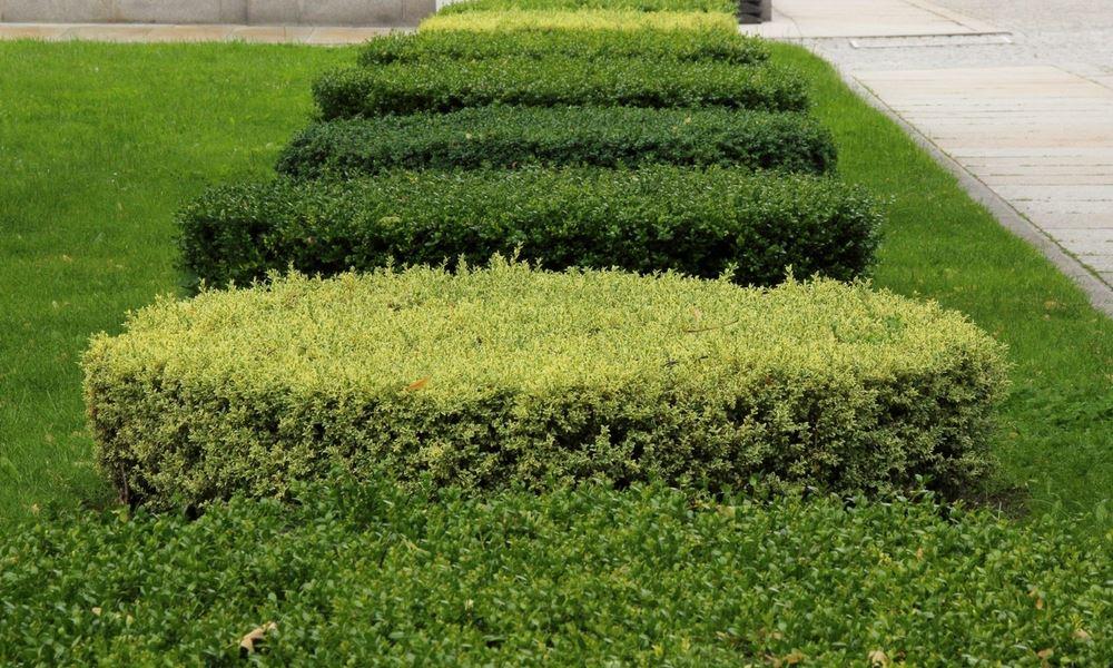 flannery's hedge trimming dublin. hedge cutting dublin (Copyx)