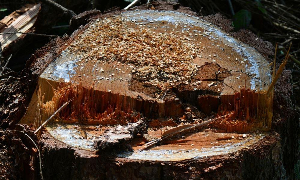 flannery's stump grinding dublin. tree stump removal dublin