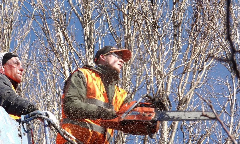 flannery's tree pruning dublin cheap tree pruning